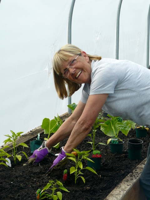 Margaret planting in the polytunnel