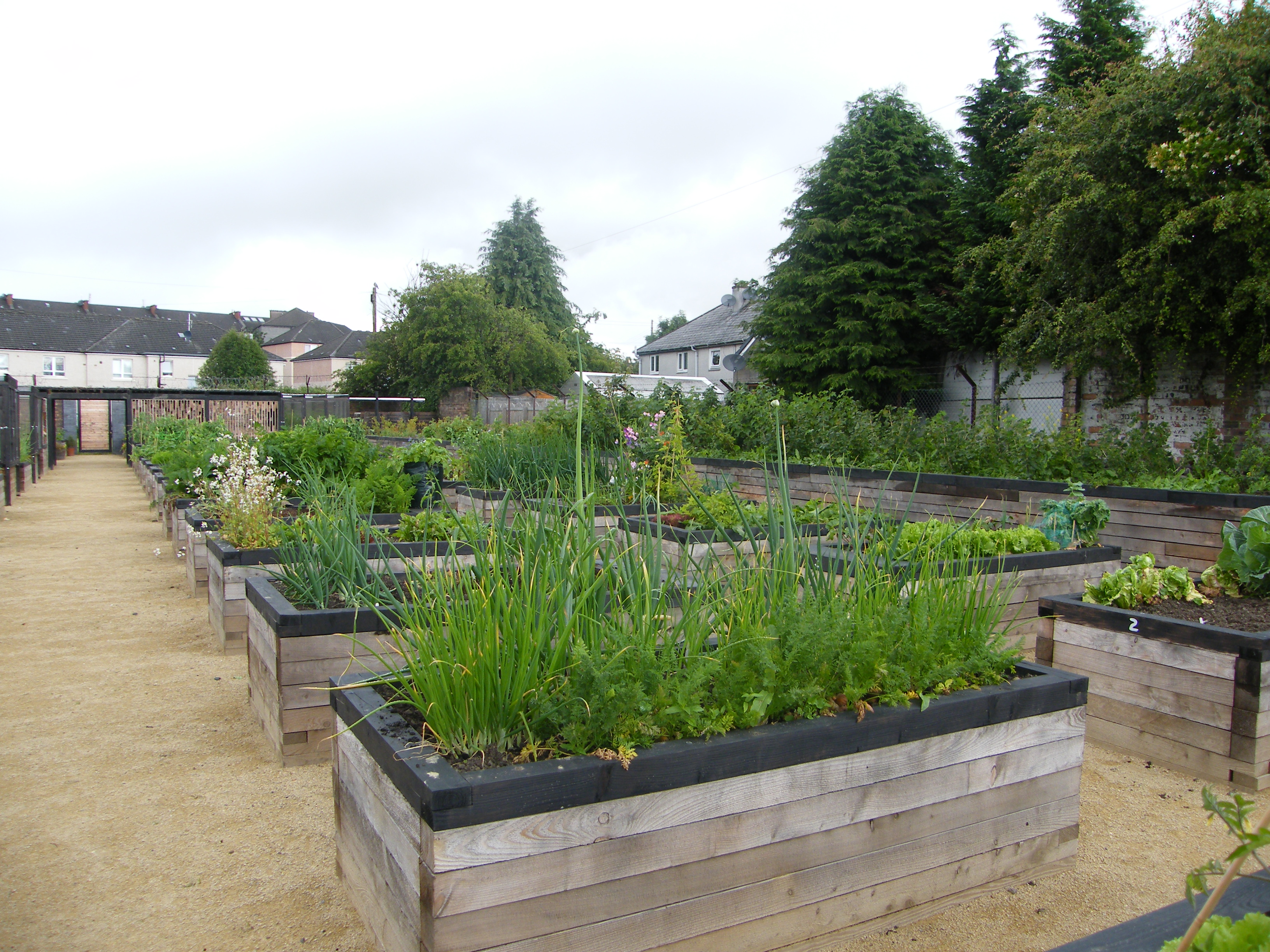 Growing vegetables in raised beds
